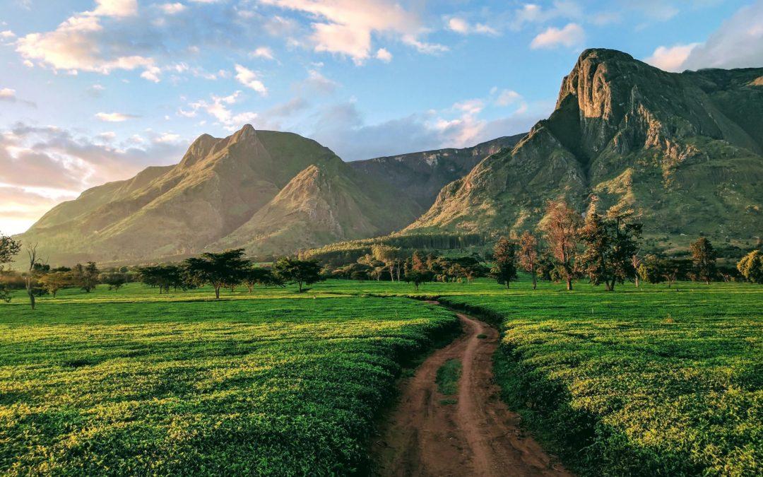 COVID Updates – Malawi